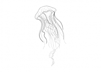 Jellyfish Sea life minimal tattoo vector t shirt printing design buy t shirt design